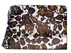 MS013<br>Seymchan Pallasite Meteorite 14.5grams Min  Mm Varies Slab
